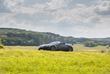 Aston Martin Vantage Roadster F1 Edition - pace-car
