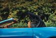 Aston Martin Vantage Roadster : L'empire des sens #13