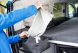Volkswagen Caddy California Maxi 2.0 TDI 122 DSG : Chambre avec vue #19