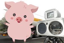 Belg blijft een varken in het verkeer