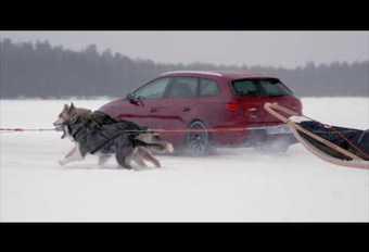 Seat Leon Cupra ST tegen hondenslee #1
