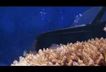 Annonce incroyable en vidéo pour une Suzuki Vitara #1