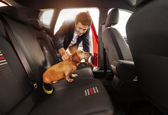 Rij jij ook voorzichtiger met een hond in de auto? #1