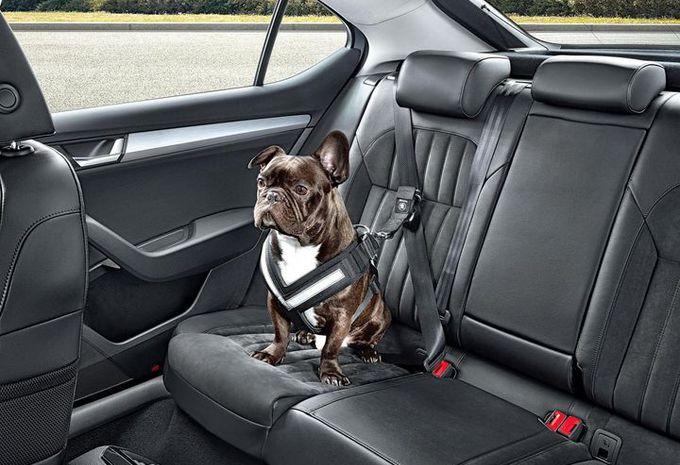 Voyager avec un animal de compagnie en voiture - Moniteur Automobile 56add48b3db7